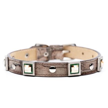 Dog collar 1