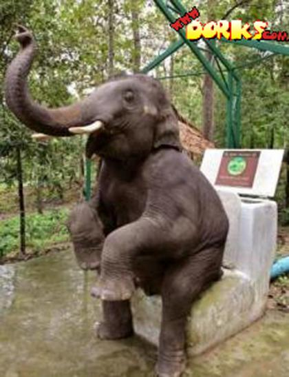 Elephant-on-the-toilet