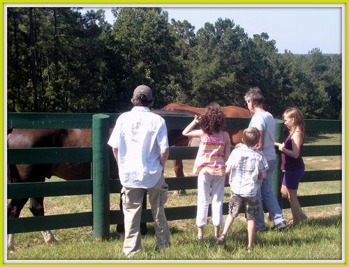Equine Rescue 005
