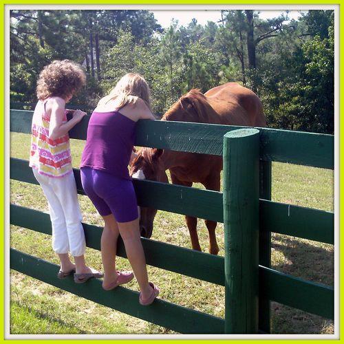Equine Rescue 024