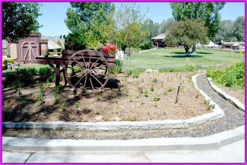 Lavender Farm Day 030