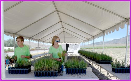 Lavender Farm Day 060