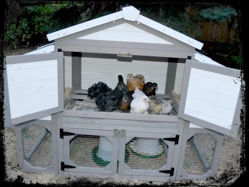 Chicken Coop 006