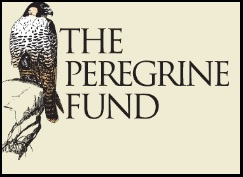 Peregrine fund Logo