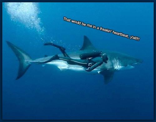 7e4a4d764b22d15be9dfce19e24039a4--shark-man-the-shark