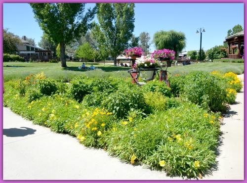 Lavender Farm Day 025