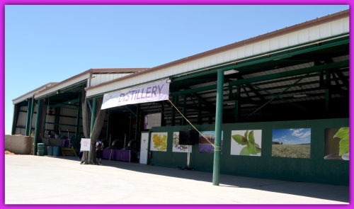 Lavender Farm Day 049