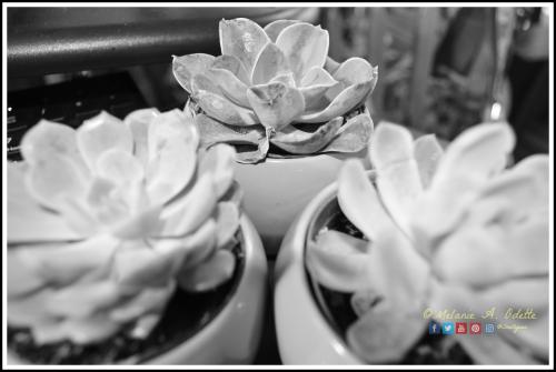 Succulents A 2019-02-07