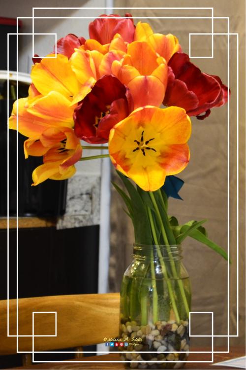 April Tulips a
